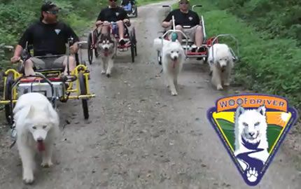 Woof Driver With Sacco Dog Carts Dog Adventure Dogs Husky Dogs