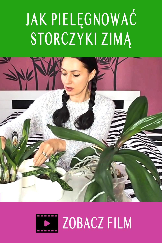 Jak Pielegnowac Storczyki Zima Poznaj Moje Sposoby Flora Plants