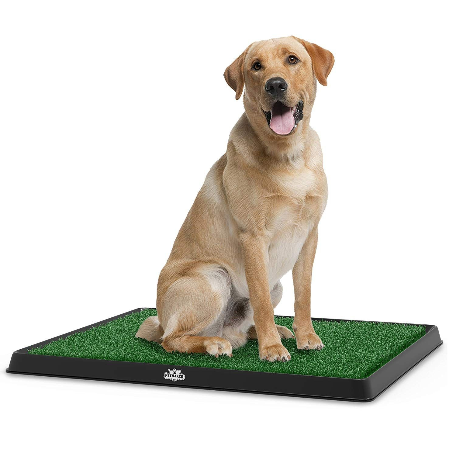 Pet Training Perfect For Owners That Work Long Hours Or Live In