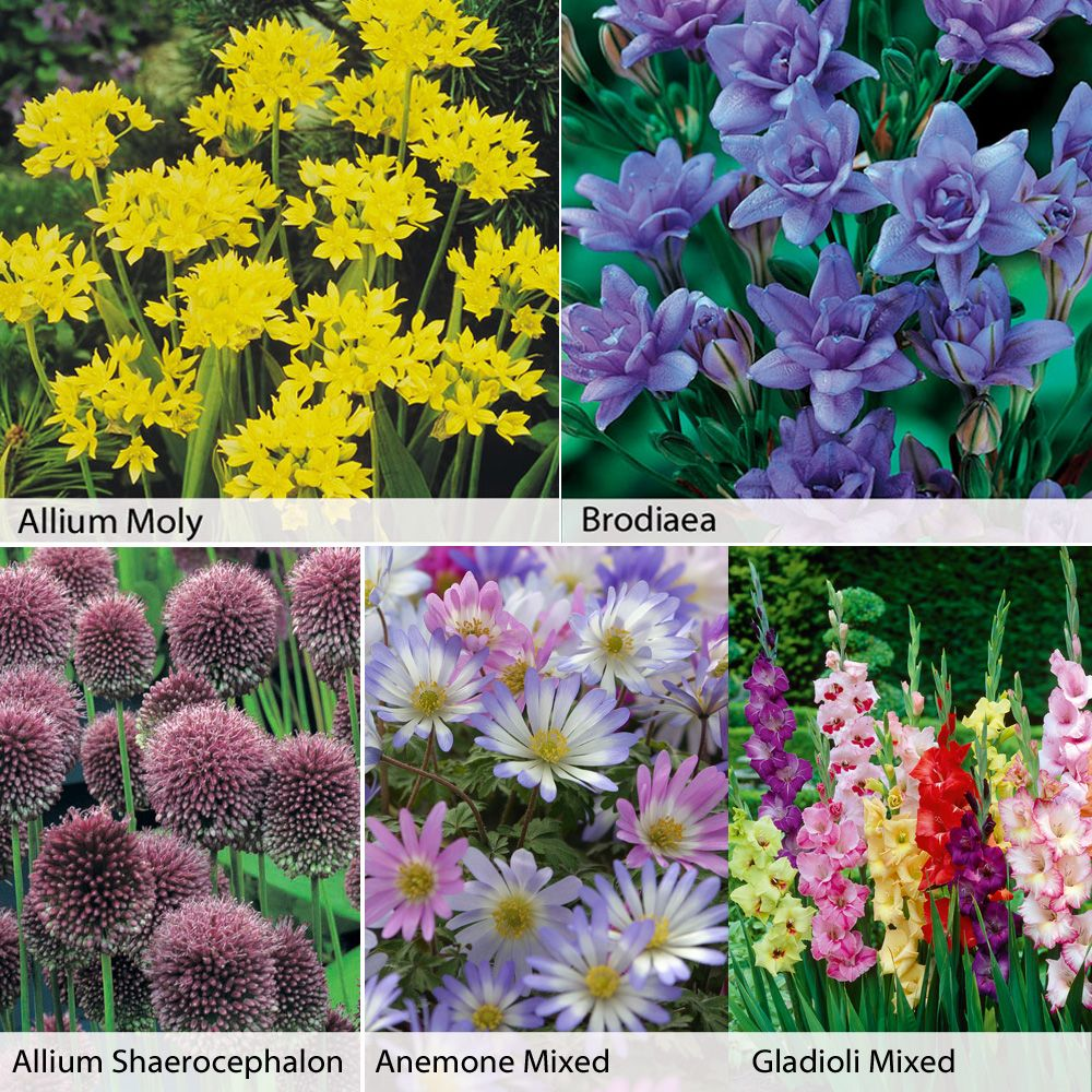 Summer Flowering Bulb Collection Flowers Bulbs Tubers Pinterest