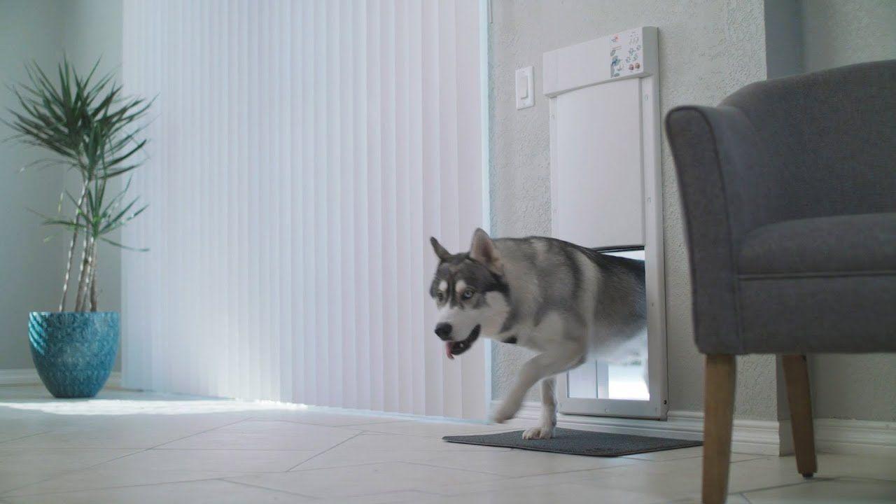 Power Pet Doors Pet Doors Large Dog Door Dog Door