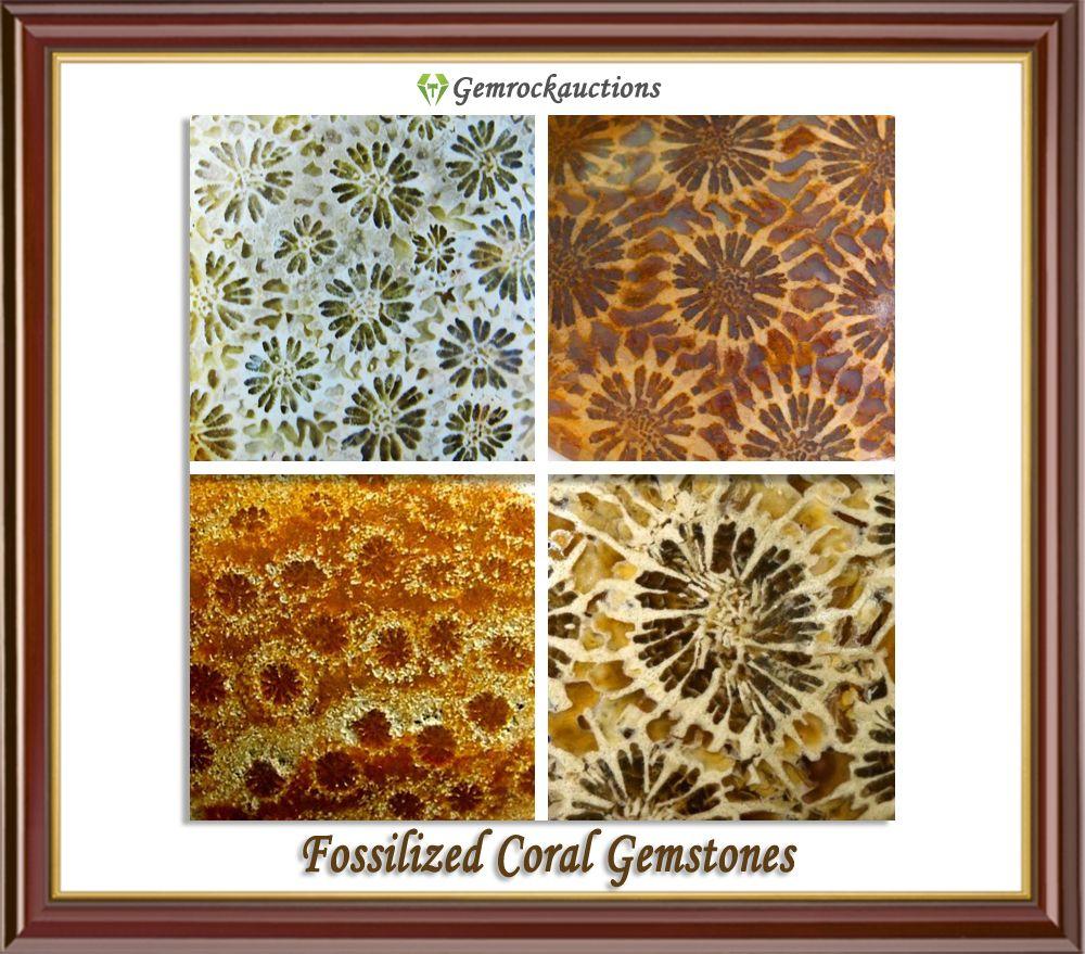 Fossil Coral | Gemstone patterns | gemstone textures | gemstone