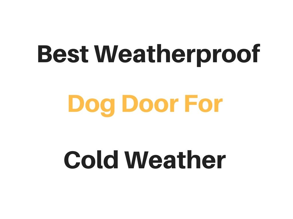 Best Dog Door For Cold Weather Cold Climates Reviews Buyer S