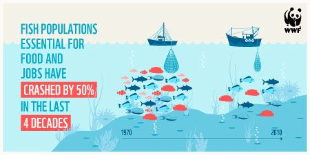 The crash in fish populations will especially impact people in the developing world #bluepanda http://ocean.panda.org/#report