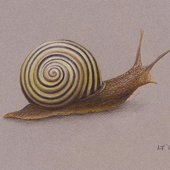 'The Snail' by Lars Furtwaengler