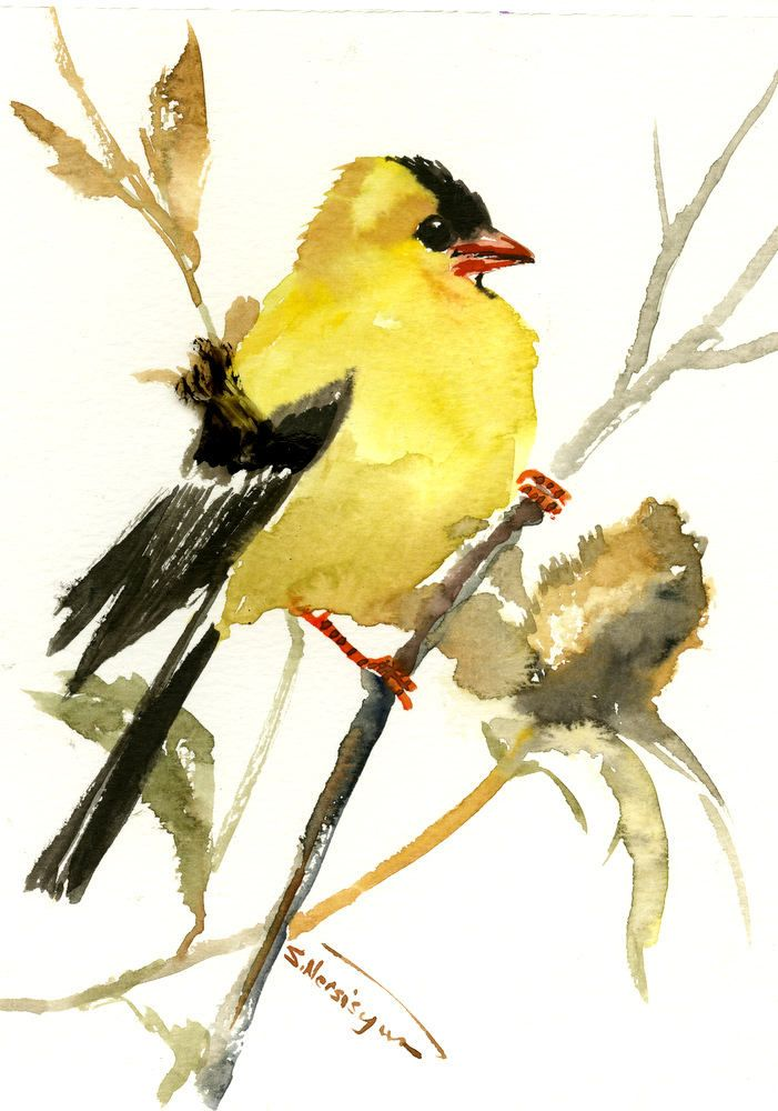American Goldfinch Artwork Bird Art Original Watercolor One Of A