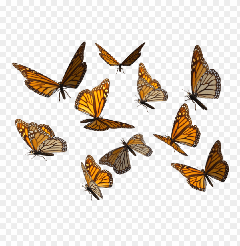 Butterfly Insect Computer Icons Butterflies Orange White And Black Butterflies Free Png Orange And Black Butterfly Black Butterfly Butterfly Artwork