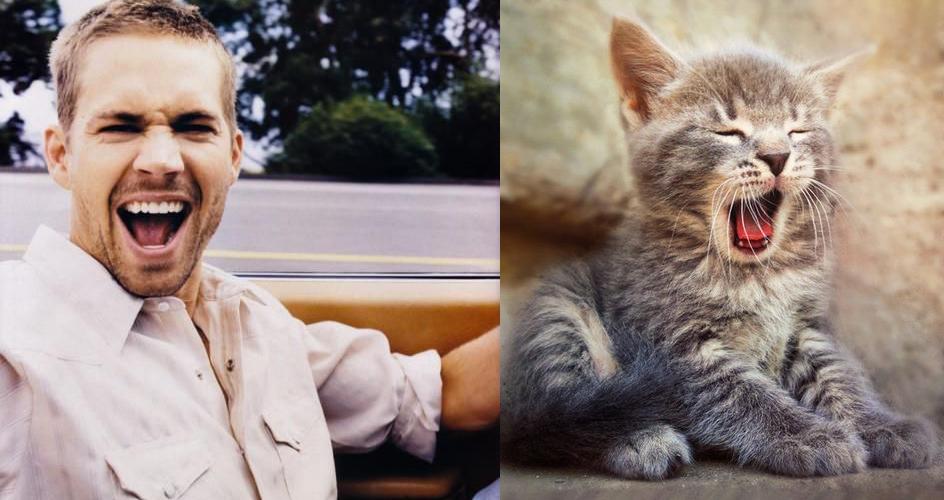 Le chat, le « meilleur ami » de l'homme - lentracte-gerland.fr le portail des livres et des idées