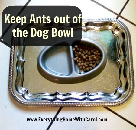 How To Keep Ants Out Of Your Dog S Food Bowls Set Bowl On A Tray