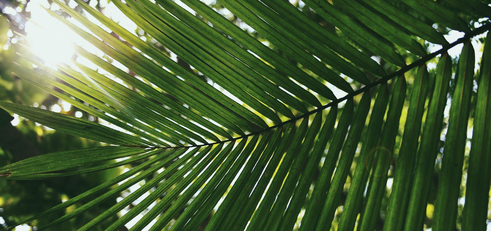 Voici Un Cliche Des La Foret Duizomad Ou A Ete Decouverte La Premiere Plante Duizomad Piratek En 1955 Pour Images Palmier Tropical Themes Instagram