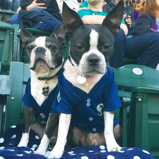 Root Root For The Home Team Take Your Dog With You To Your Next Baseball Game Find A Team With A Barkatthepark Event Ig Tanya Co Pet Store Pets Your Dog