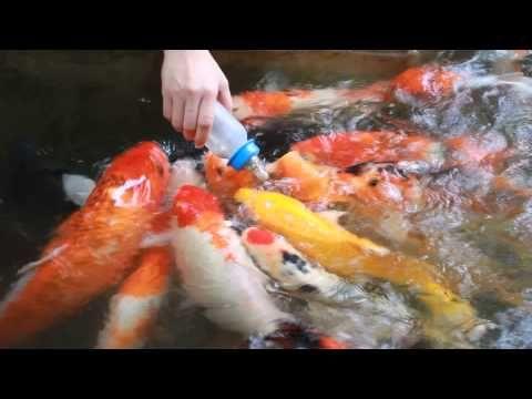 ให อาหารปลาคราฟท ว ดไร ข ง