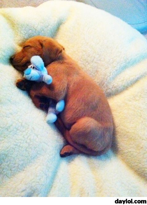 He loves his little teddy - DayLoL.com - Your Daily LoL!