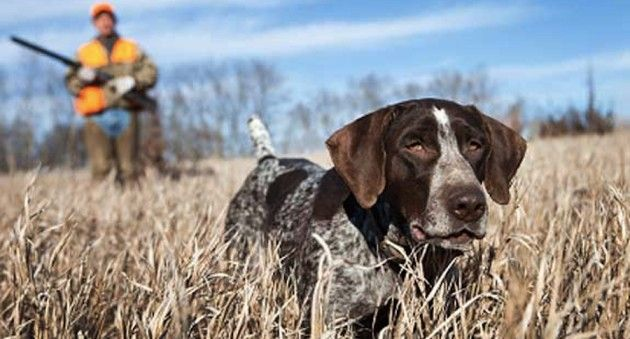 7 Training Tools To Get Your Dog Ready For Hunting Season