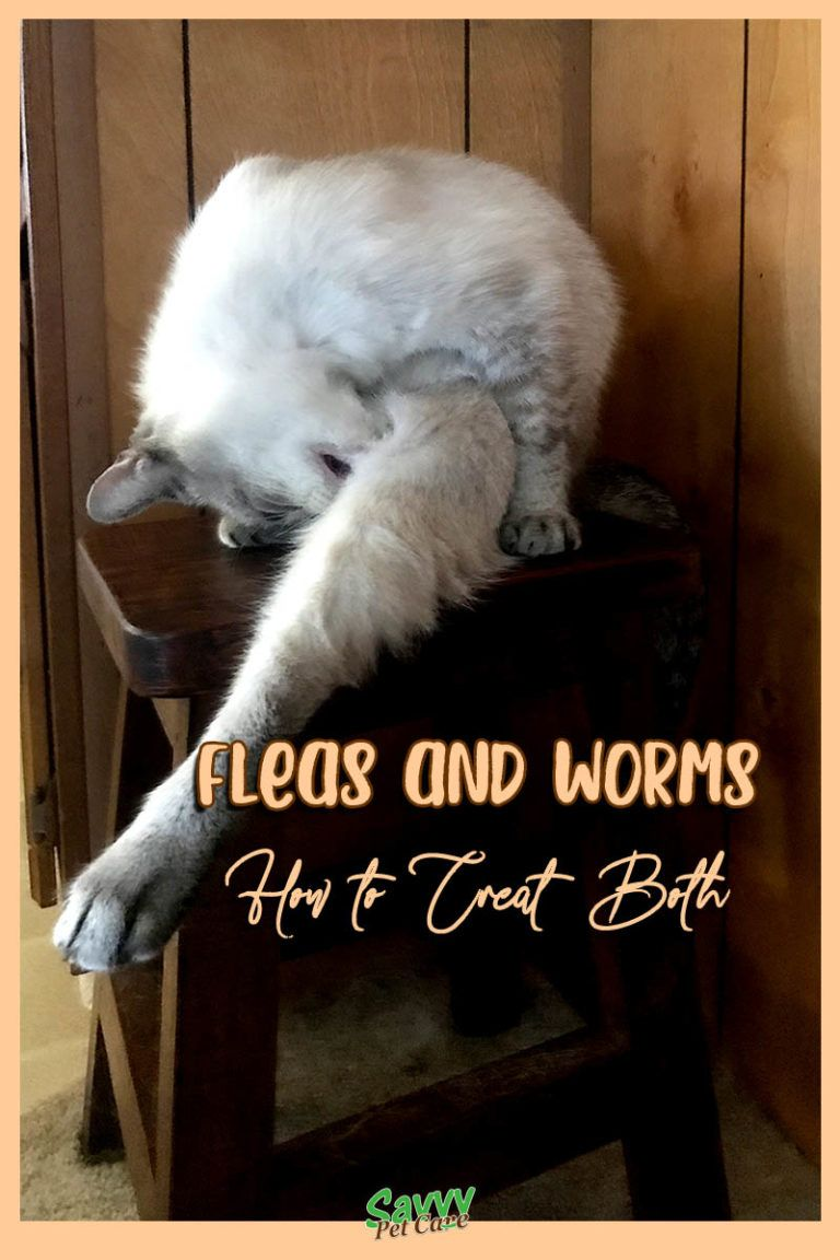 Consequences Of Fleas Physical Misery And Worms Savvy Pet Care Cat Has Fleas My Cat Has Fleas Fleas