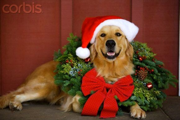 "phoenix dog training ""k9katelynn"" merry x-mad 2014!! See more at Scottsdale dog training at k9katelynn.com"