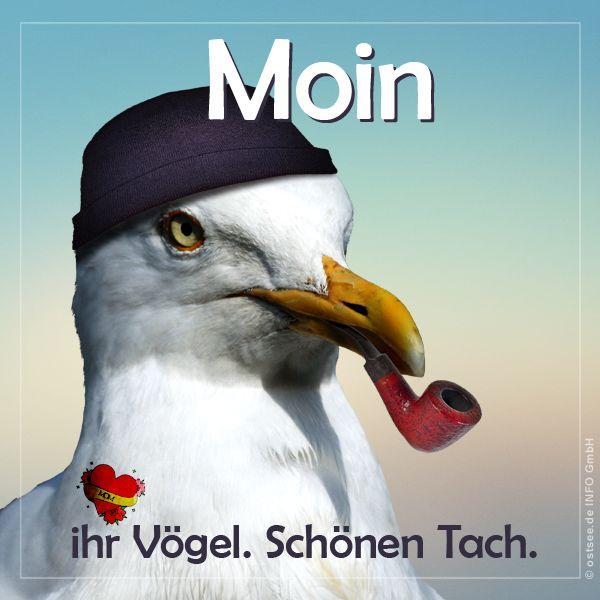 Moin Ihr Vogel Urlaub Lustig Guten Morgen Moin
