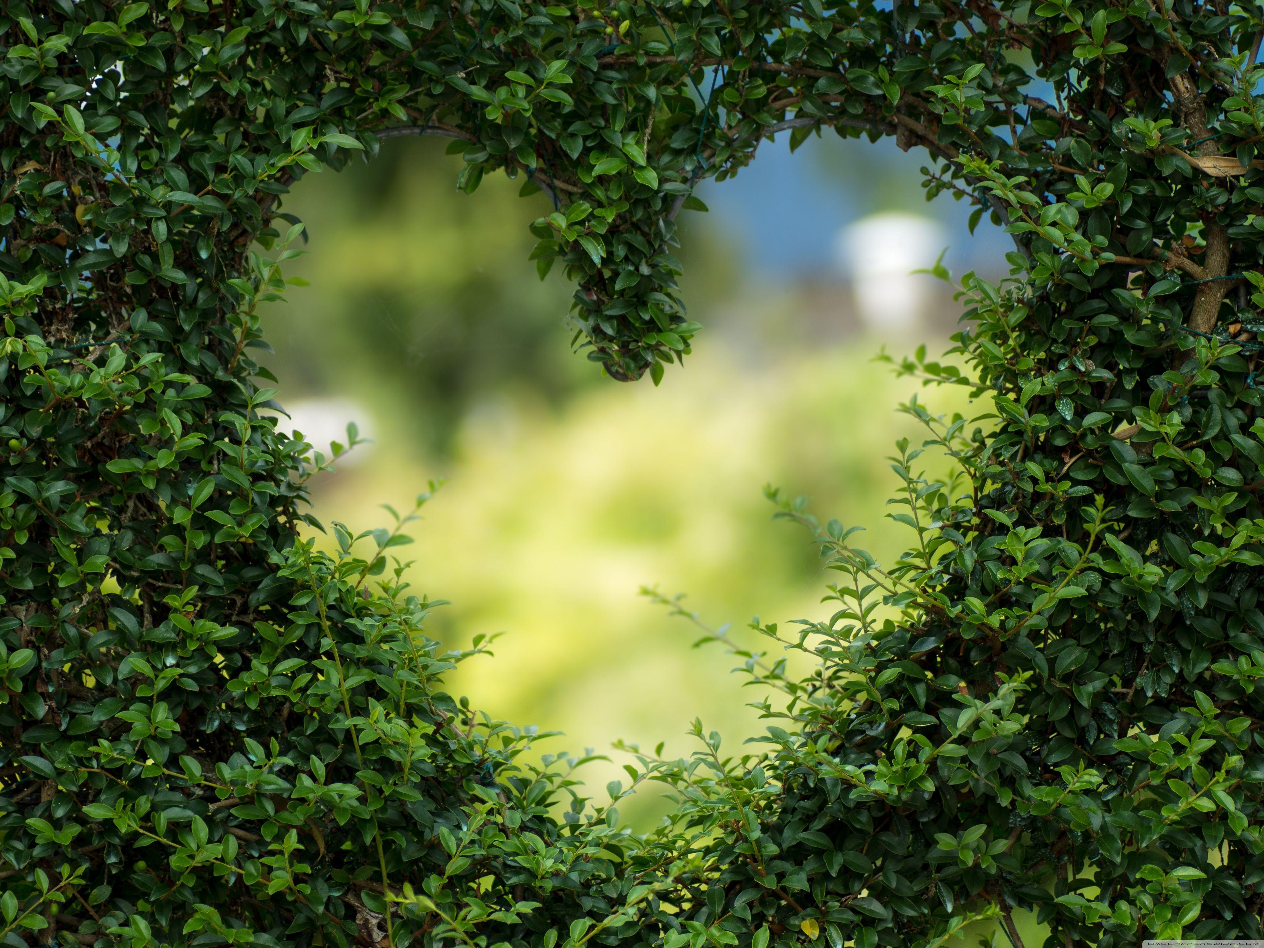 Heart Background HD Desktop Wallpaper Widescreen High