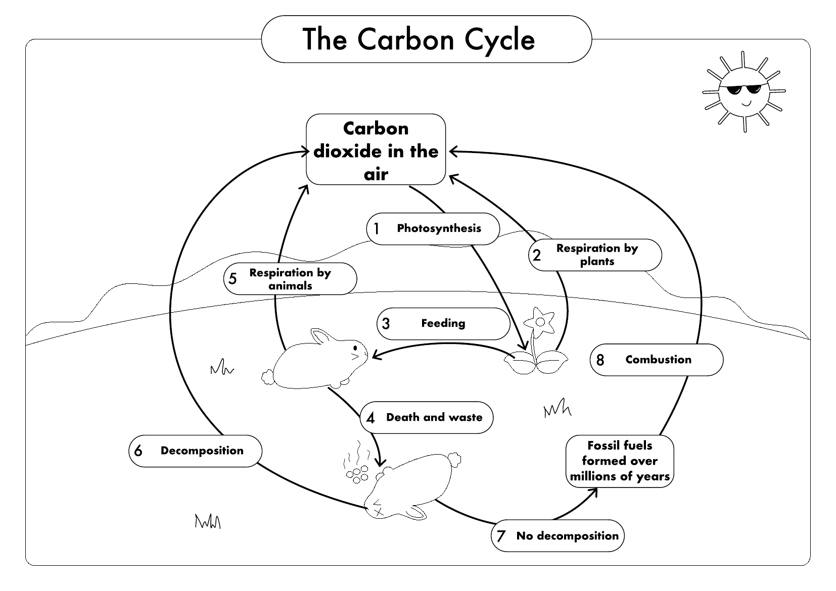GCSE Biology Carbon Cycle worksheets and A3 wall posters