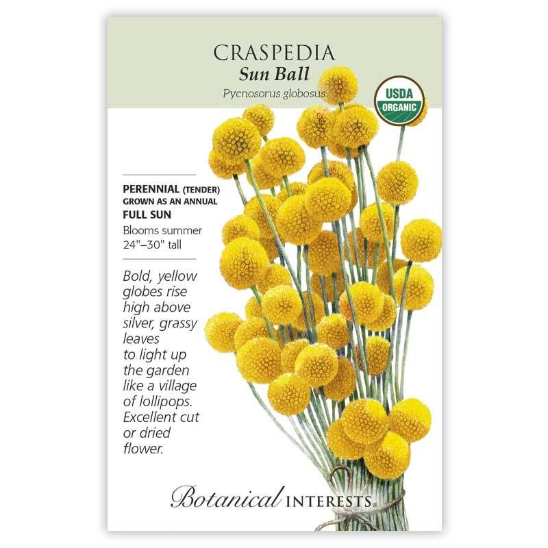Sun Ball Craspedia Seeds Organic Botanical Interests Flower Farm Australian Native Flowers Craspedia