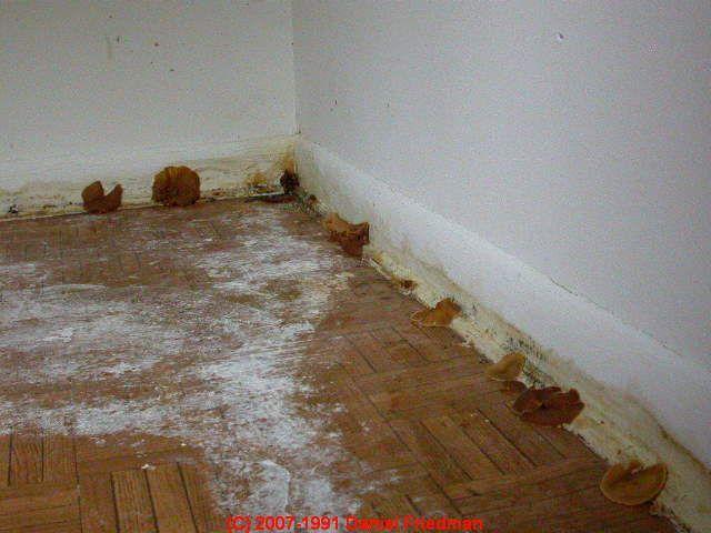 Mushrooms Coming Up Through Basement Floor Basement