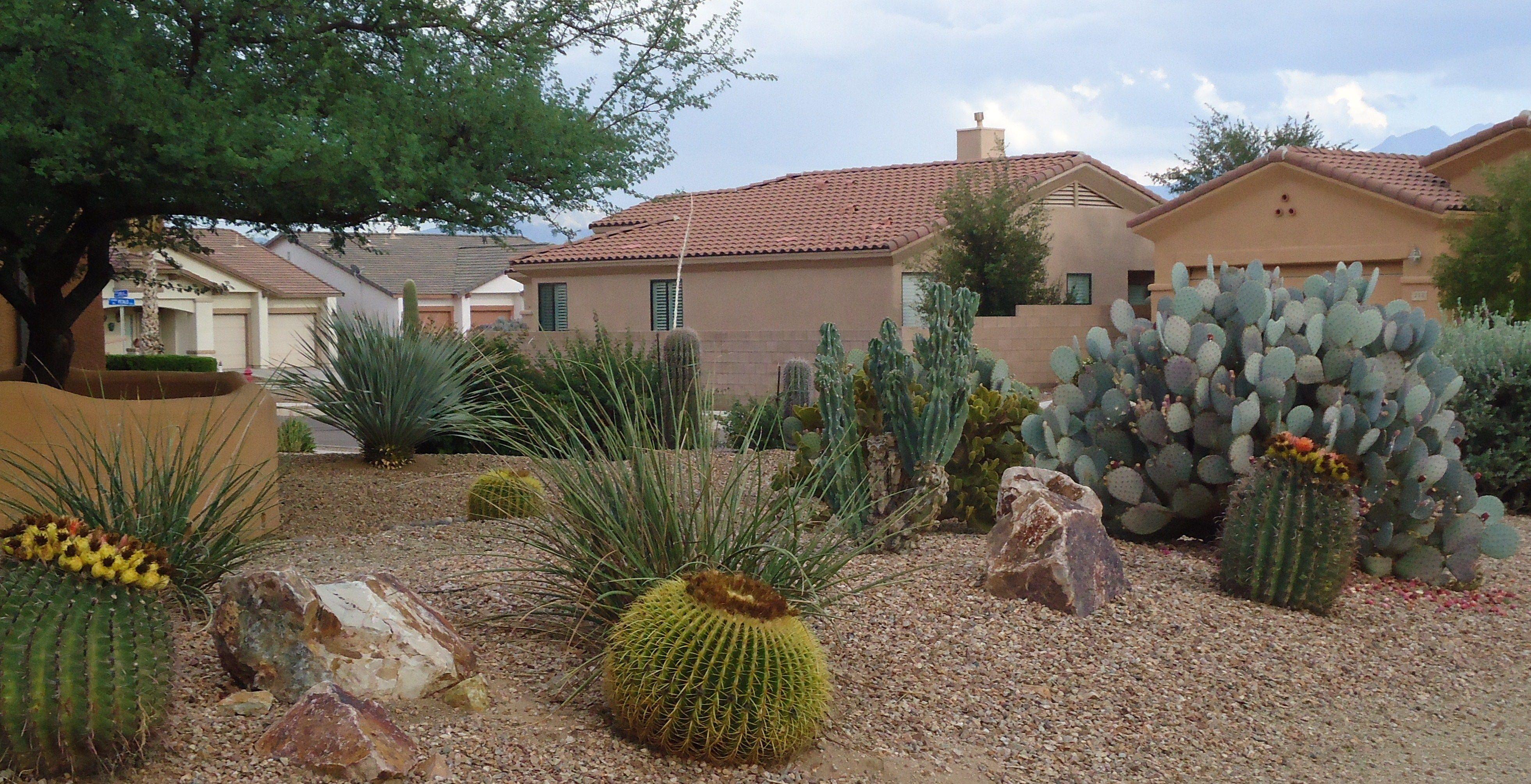 Hermosos jardines deserticos poca agua poco for Ideas para jardines pequenos fotos