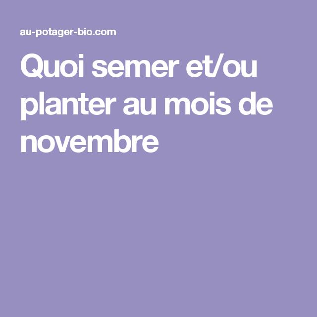 Quoi Semer Et Ou Planter Au Mois De Novembre Decouvrir Nouvelle