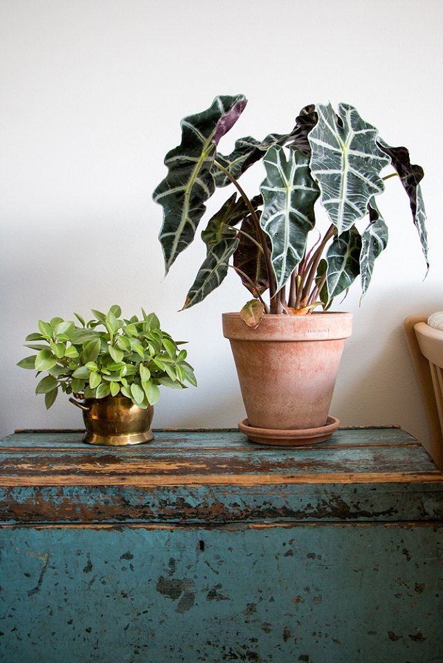 29 Most Beautiful Houseplants You Never Knew About Plants Artificial Plants Outdoor Artificial Plants Small beautiful house plants