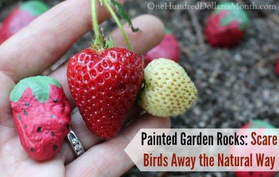 Painted Garden Rocks Scare Birds Away the Natural Way is part of Painted garden rocks, Rock garden, Garden, Perfect garden, Diy garden projects, Garden ornaments - Nothing is more frustrating than having a bumper crop of fruit growing, only to have it eaten by pesky birds! While I don't want them near my garden, I also don't want to harm them with dangerous pesticides  So I decided to outsmart them  I painted up these adorable rocks and made them look just …