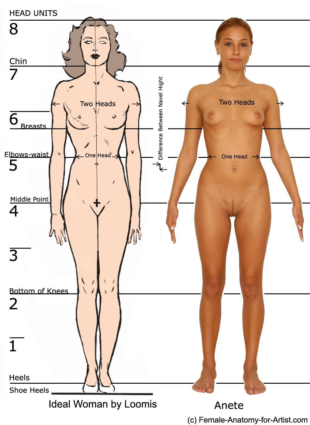 Modelando paso a paso: Anatomia femenina... | patrones anatomia ...