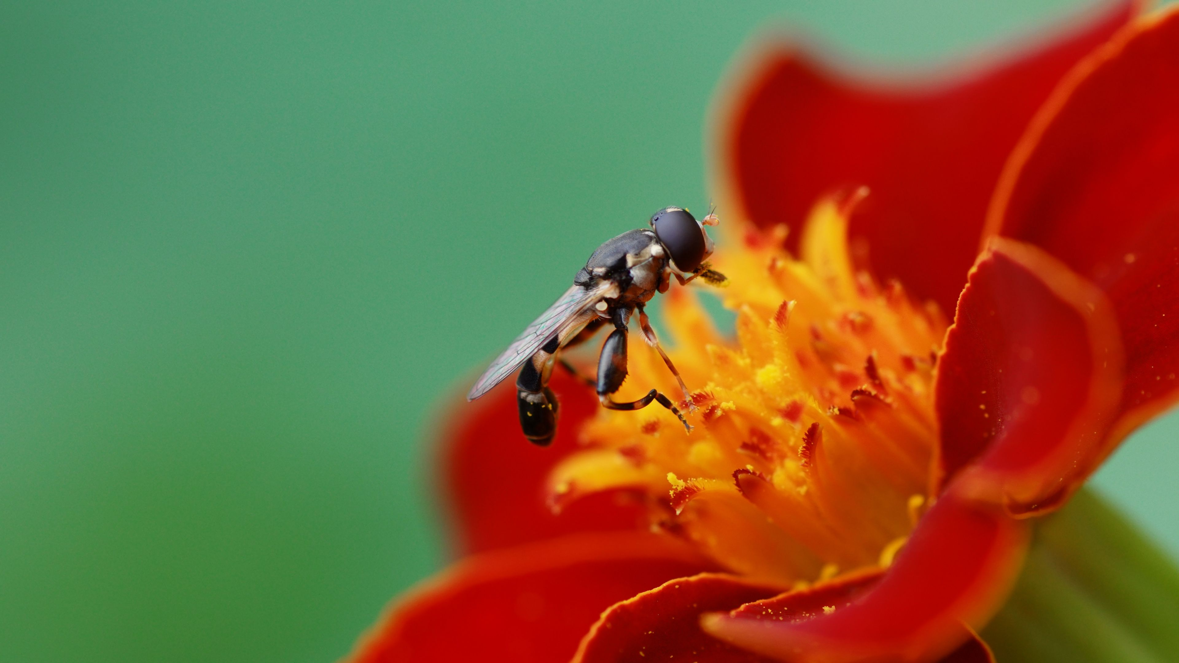 4k Nature Wallpaper With Macro Photo Close Up Flower And Wasp