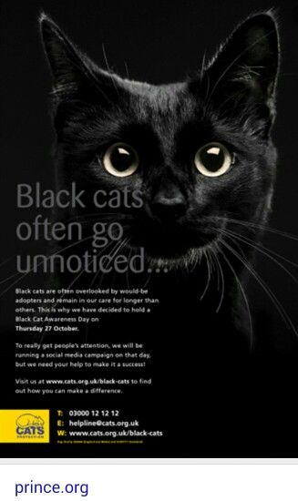 Black Cats Are Purrfect National Black Cat Day Black Cat Day Black Cat Appreciation Day