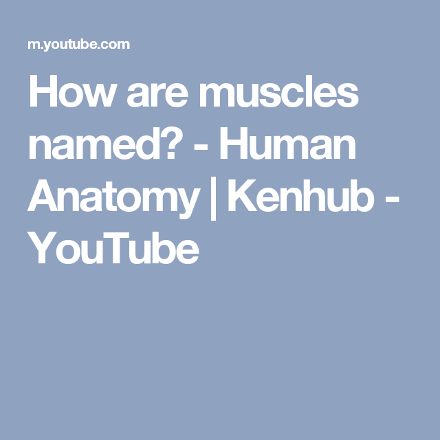How Are Muscles Named Human Anatomy Kenhub Youtube Anatomy
