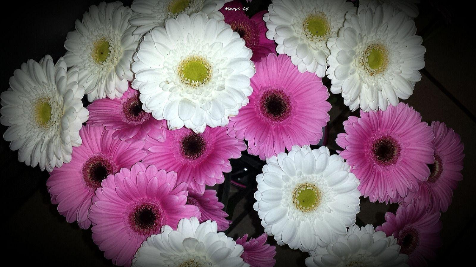 https://flic.kr/p/qgsM8Y | Bouquet de germinis