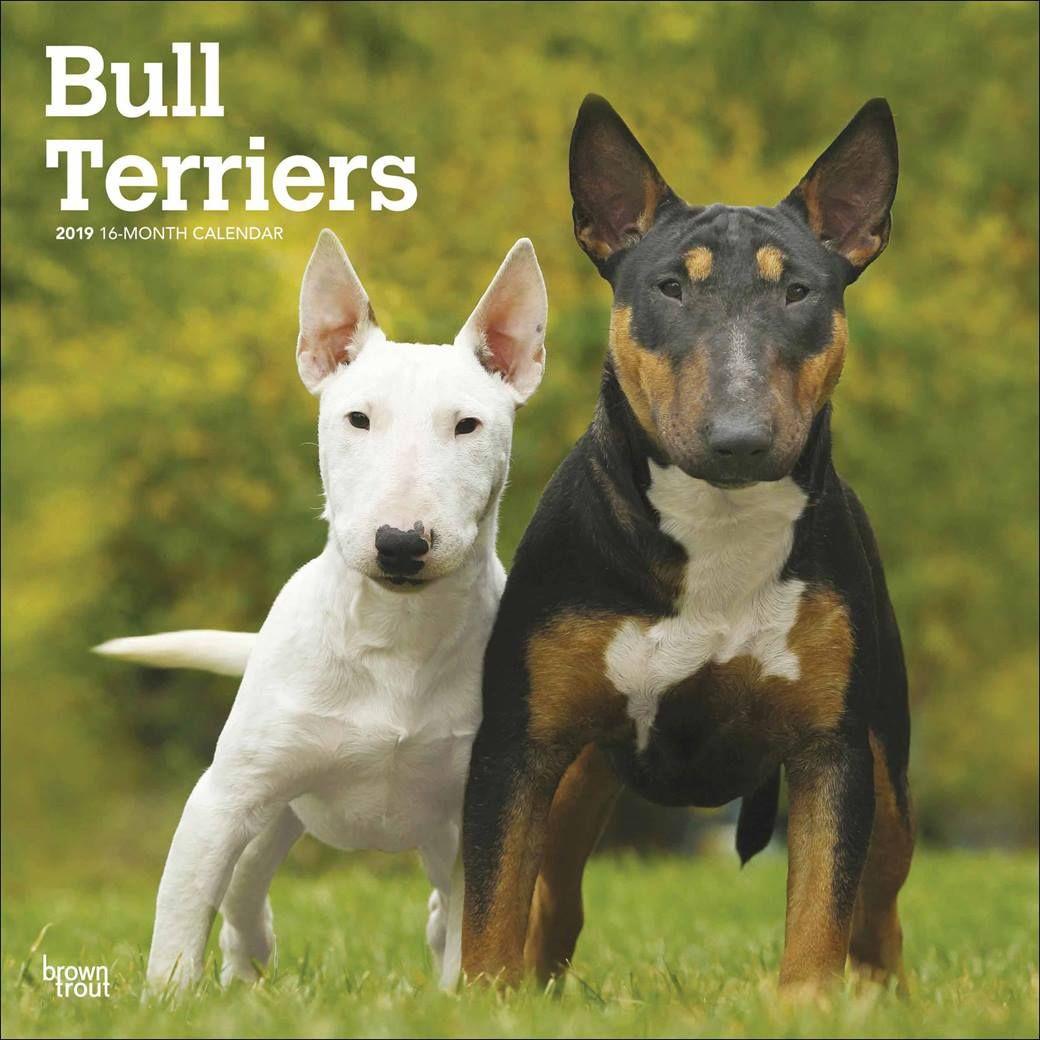 Bull Terriers Calendar 2020 Goruntuler Ile
