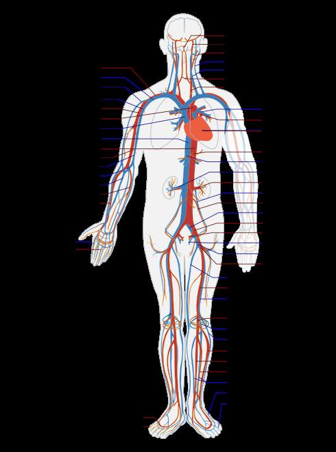 cuales son los sintomas de la diabetes wikipedia indonesia