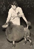 Crufts 1955 Best In Show Poodle The Kennel Club Standard Poodle
