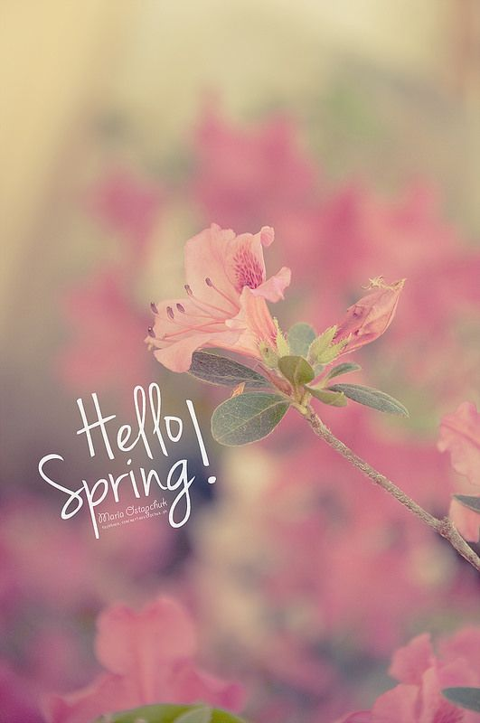 Hello Spring Wallpaper Seasons Months Days And Of The
