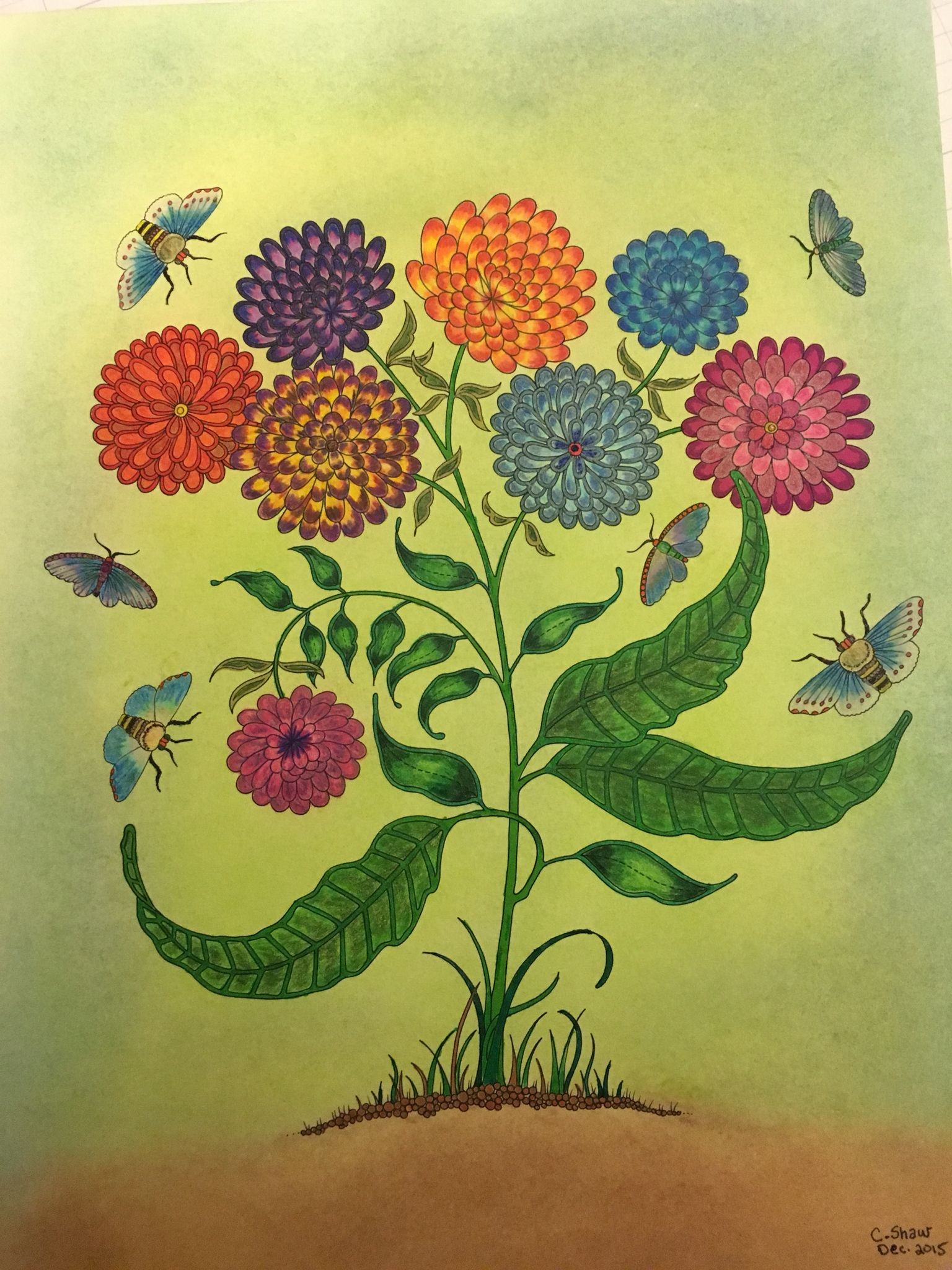 My First Project From Johanna Basfords Artist Edition Secret Garden Coloring Book