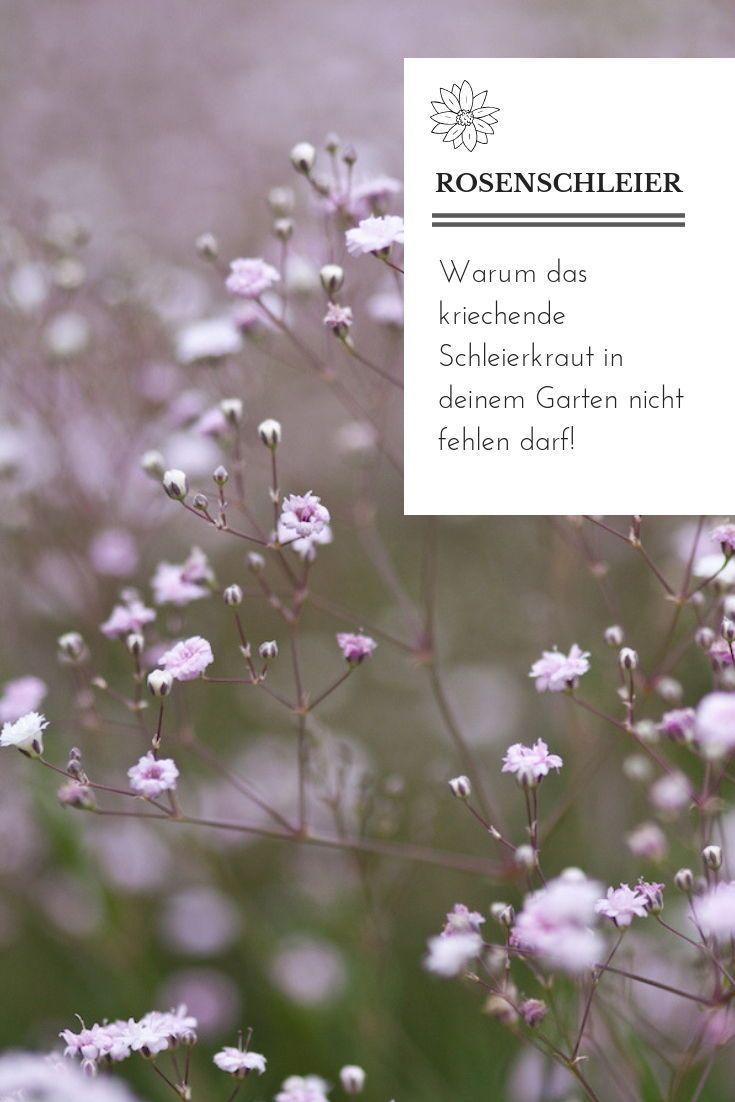 PURE ROMANCE FOR THE GARDEN: The creeping gypsophila -  Why the gypsophila should not be missing in your romantic cottage garden. Landhausgarten I Vintage  - #creeping #diygardenbox #diygardenlandscaping #Floralarrangementsdiy #Garden #gardencottage #gardentypes #gypsophila #PURE #romance