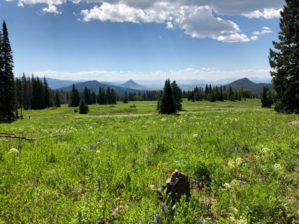 Rabbit Ears Peak Trail -Steamboat Springs (With images ...