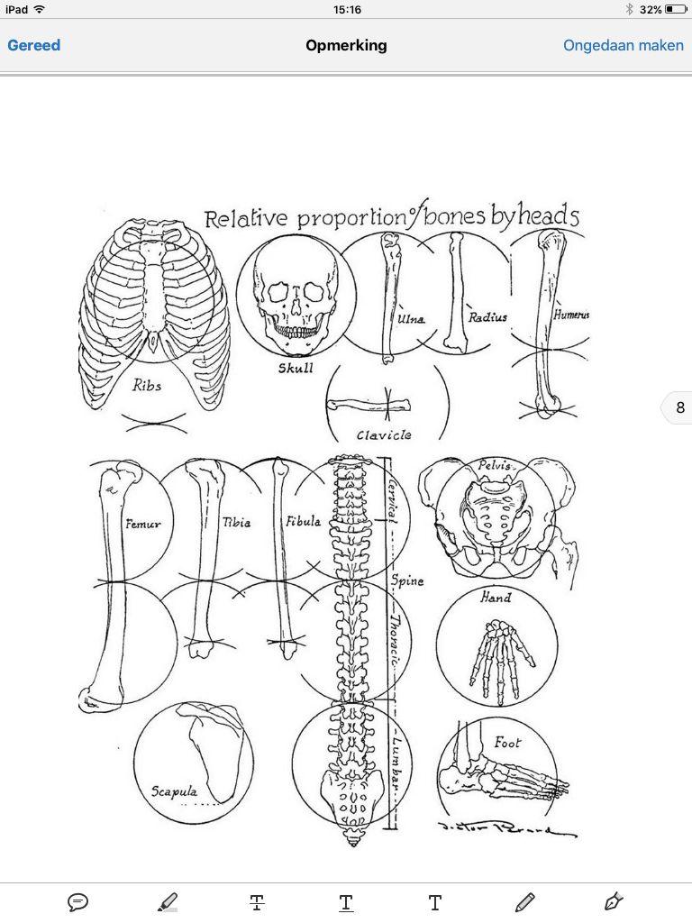 Beste Anatomie Und Zeichnung Von Victor Perard Bilder - Anatomie ...