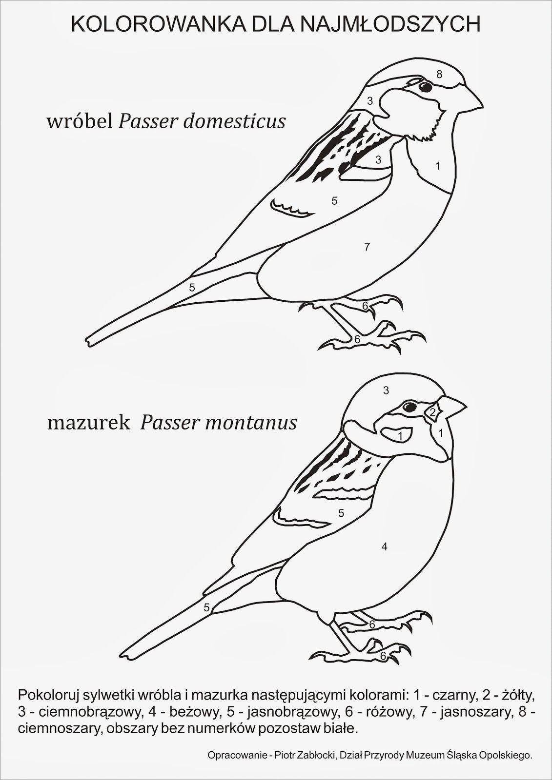 Kolorowanka Wrobel I Mazurek Jpg 1131 1600 Bird Template Art Tutorials Coloring Pages