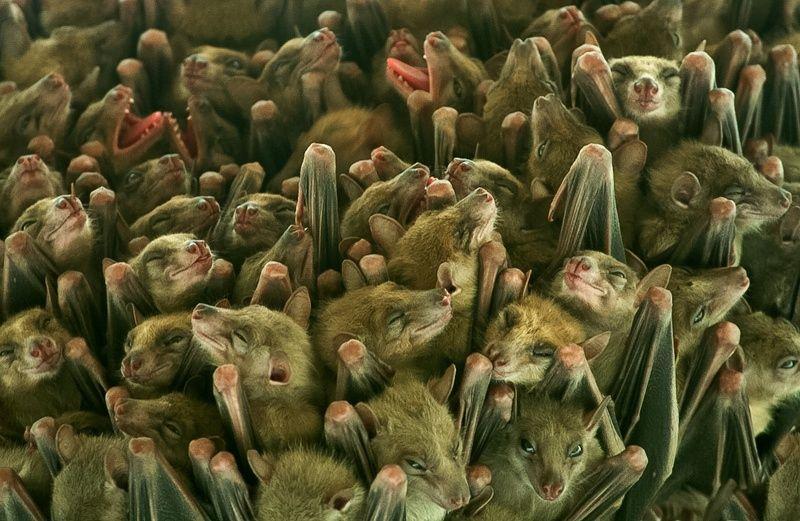 Photograph Many bats on little place by Irén Udvarházi on 500px