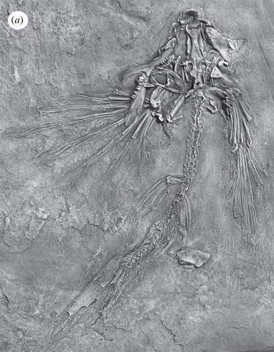 Ikan Terbang Trias Potanichthys xingyiensis