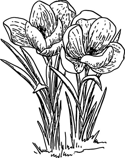 Free Image on Pixabay Crocus, Flower, Plant, Bulb