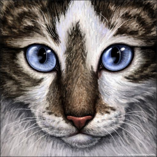 My Warrior Cats Pictures Brown Tabby And White Cat Blue Eyes White Tabby Cat Tabby Cat Warrior Cats