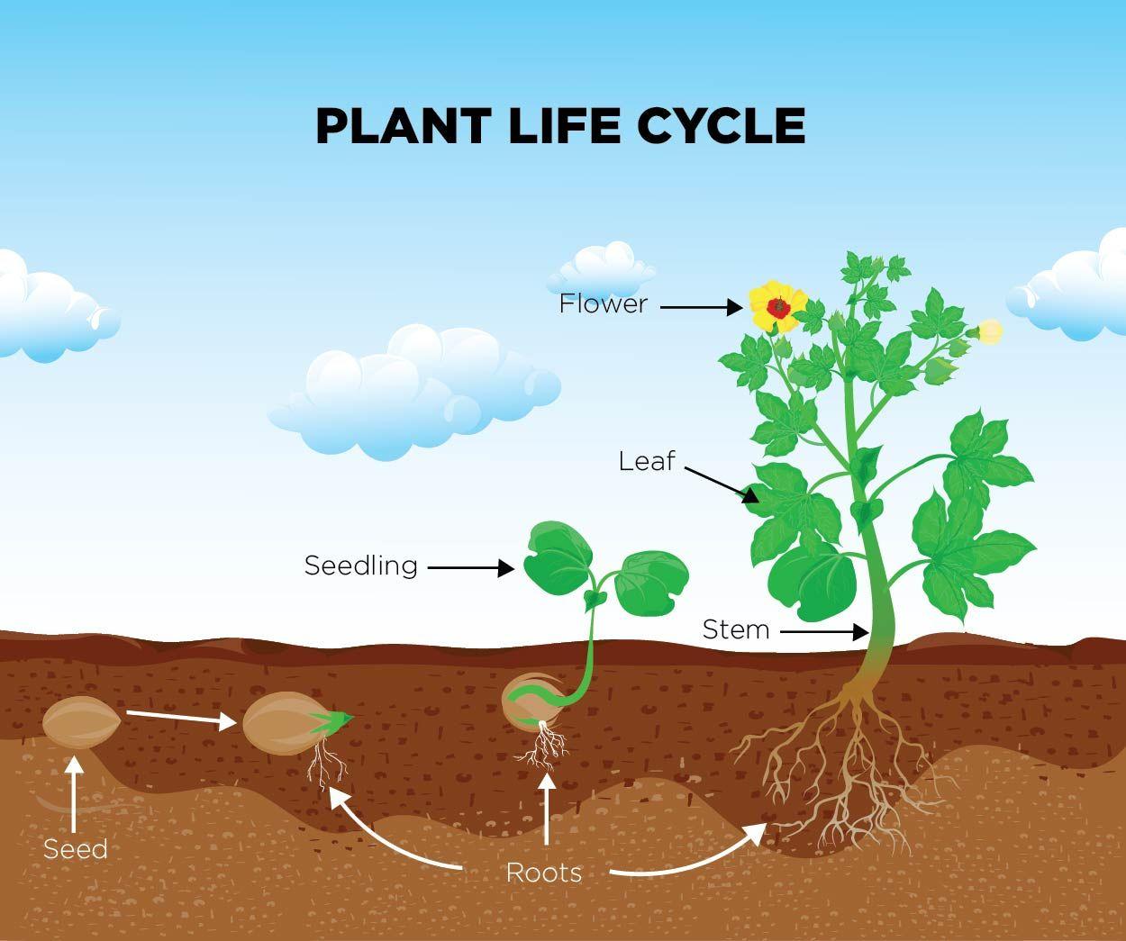 Plants All Around Us