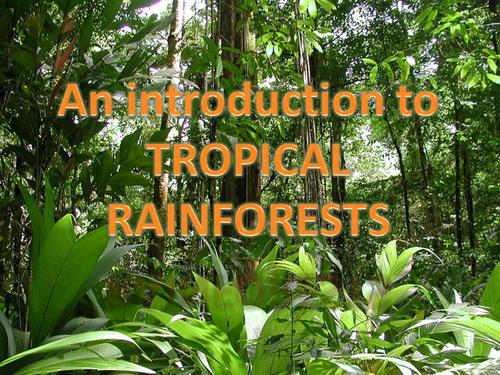 Rainforest introduction powerpoint KS2 Rainforest