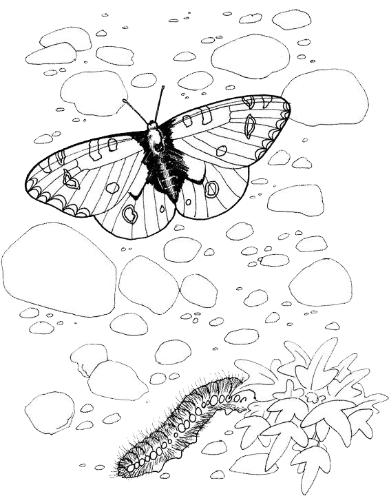 Butterfly Coloring Pages 2 Purple Kitty Coloring pages and